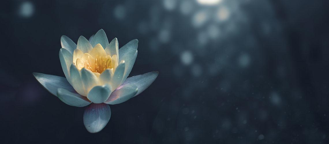Ayurveda, l'arte del buon vivere: rimedi e benefici