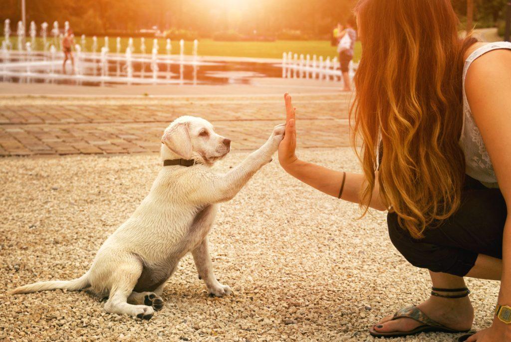 cane cucciolo da la zampa a una ragazza