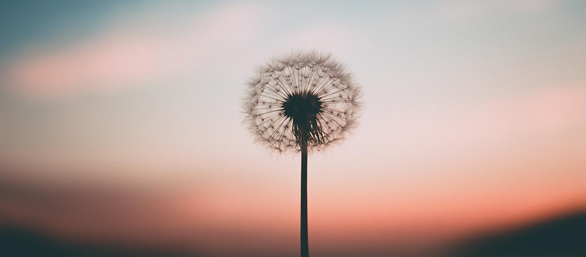 La psicoterapia cognitiva, nuovi filoni: la Mindfulness
