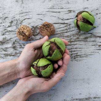 Regime alimentare Paleo: caratteristiche e benefici