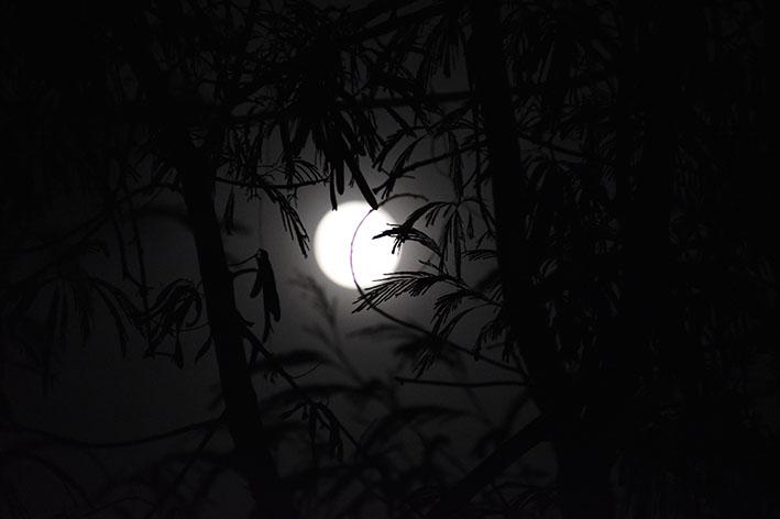 Luna Nuova di Novembre 2018