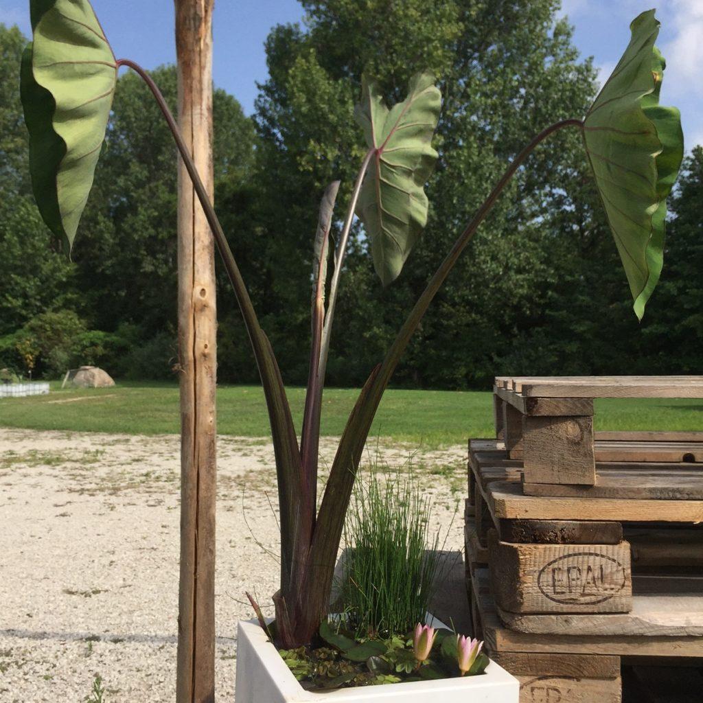 Mini Laghetto Per Terrazzo laghetto bonsai, armonia acquatica i smazing