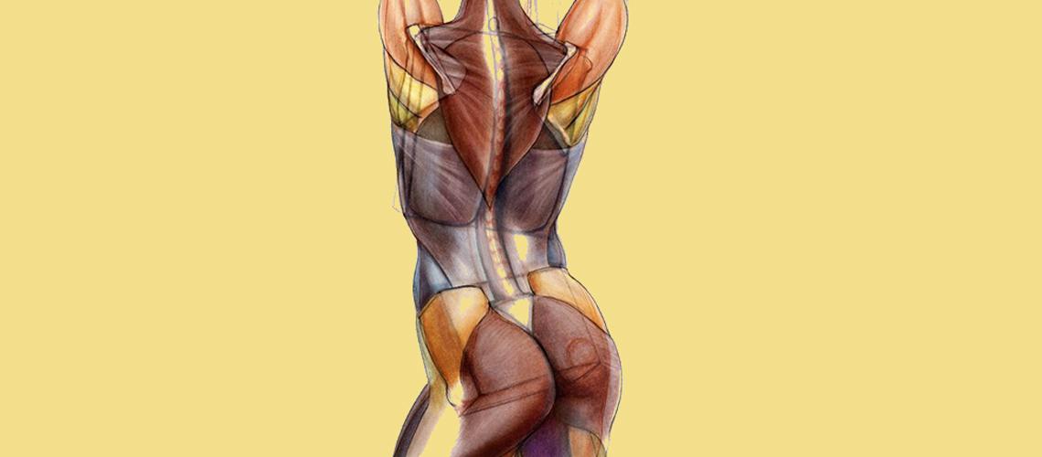 Fascia muscolare e salute