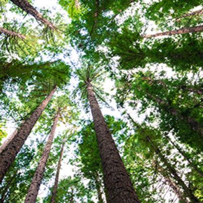 Tree Theraphy: perché abbracciare gli alberi e stare nel verde fa così bene